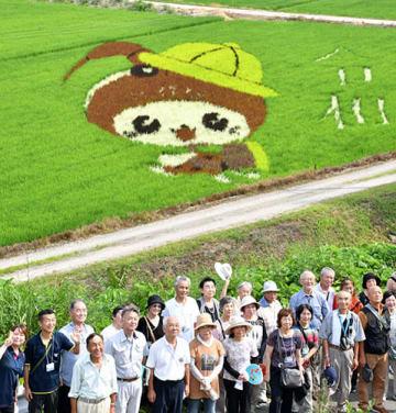 神奈川県海老名市の「えび~にゃ」をデザインした田んぼアートが見頃を迎え、26日は同市民らが見物に訪れた=白鷹町高玉