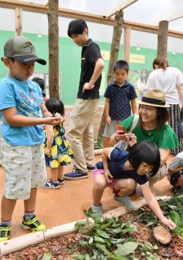 生きたカブトムシやクワガタムシにも触ることができる「大昆虫展」=27日午前、宮崎市・宮交シティ