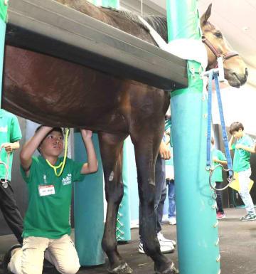聴診器を馬の心臓付近に当て、心拍数を計る子ども(栗東市御園・JRA栗東トレーニングセンター)