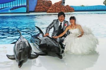挙式を見守ってくれたイルカと触れ合う新郎新婦(27日、和歌山県白浜町で)