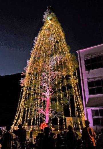 1万個のLEDをまとって輝くメタセコイア(28日、和歌山県印南町皆瀬川で)