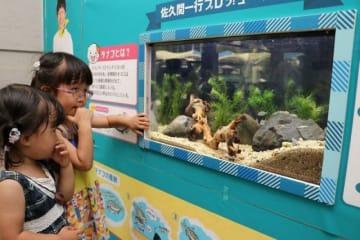 佐久間さんプロデュースのタナゴを展示したオリジナル水槽