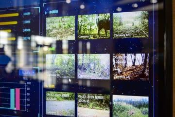 AIビッグデータ、野生動物保護を後押し 黒竜江省