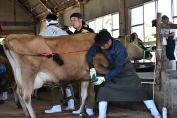 牛のひづめを適切に削る技術を競った県牛削蹄競技大会=1日午前、都城市・高千穂牧場