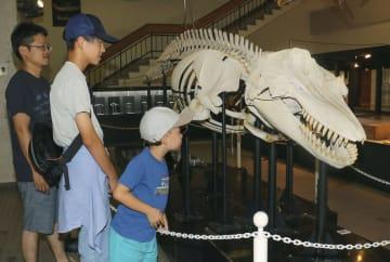 特別展「鯨と歩んだ50年」で展示されたシャチ「波」の全身骨格標本=2日午前、和歌山県太地町の町立くじらの博物館