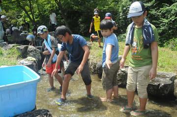 川に入り、ヤマメのつかみ取りに挑戦する児童ら=2日、岡山県真庭市