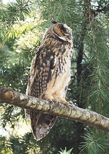 住宅地にある公園でトラフズクの親子計5羽が見られた=3日午後5時21分、山辺町近江