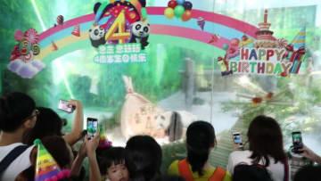 誕生日を迎えた双子のパンダ、ドラゴンボート・ケーキでお祝い 福建省アモイ市