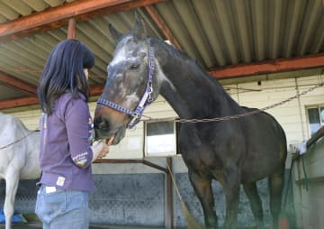 40歳になった元競走馬の「シャルロット」=5月、長野県佐久市