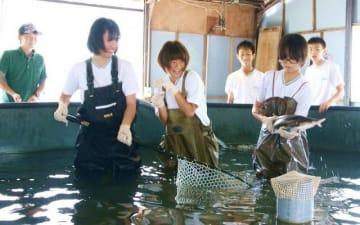 養殖池でチョウザメを捕まえる大佐中の生徒ら