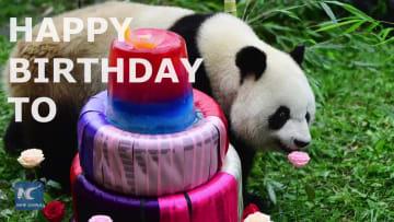 パンダの「初心」、3歳の誕生日おめでとう!