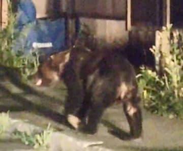 札幌市南区の住宅街を歩き回るクマ=8日午前2時ごろ(同市提供)