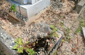 イノシシに荒らされたとみられる墓の区画=8月9日、福井県の福井市東山墓地公園