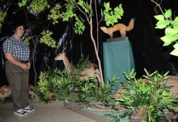 シカやイノシシなど夜行性動物の剥製が並ぶ会場