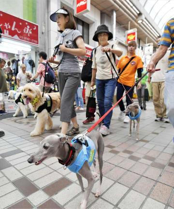 東京都品川区の商店街をパレードする「特殊詐欺被害防止犬」と飼い主=12日