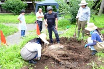 地元住民が見守る中で行われた切り株の掘り起こしイベント=7月27日、旧本間酒造