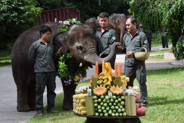 雲南省でアジアゾウ愛護イベント開催 世界ゾウの日