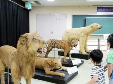 戦時中に処分されたライオンなどの剥製=12日、大阪市天王寺区の天王寺動物園