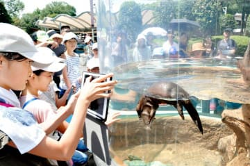 動物園の役割を考える講座で、コツメカワウソの行動展示を見学する子どもたち