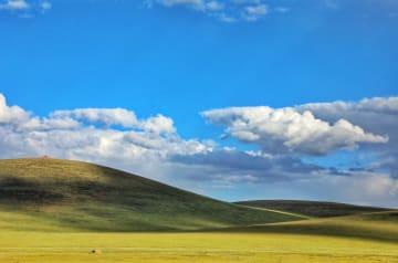 草原で希少動植物を観察 青海省玉樹チベット自治州