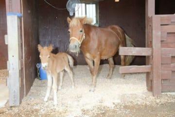 母親のリーフ(右)に寄り添い、愛らしい姿を見せる「嵐(ラン)」