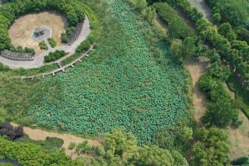 長江のほとり、緑に満ちた三橋湿地公園 江蘇省南京市