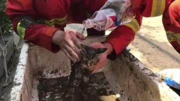 水害後のぬかるみから子猫を救出、消防隊員が手厚くケア