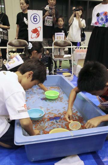 奈良県大和郡山市で開かれた「第25回全国金魚すくい選手権大会」=18日