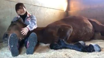 """""""膝枕""""で寝る馬がいた…ここまでダラーンとするものなの?専門家にも聞いてみた 画像"""