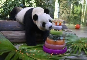 パンダの兄弟が6歳の誕生日 中国海南省