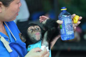動物たちの世話係を体験できる動物園 タイ