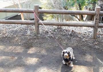 リードをつながれたまま捨てられていた犬(泉の森・自然観察センター提供)