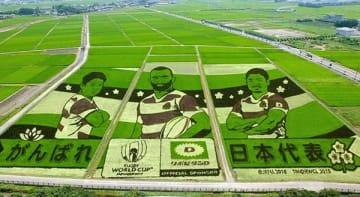 ラグビー日本代表を応援する田んぼアート=行田市小針