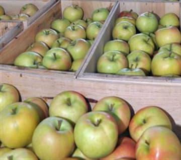台湾で人気が高まった黄色リンゴ「トキ」。22日の会議では、生産・流通・販売の関係者が、適期収穫と高品質生産に向け意識統一を図る