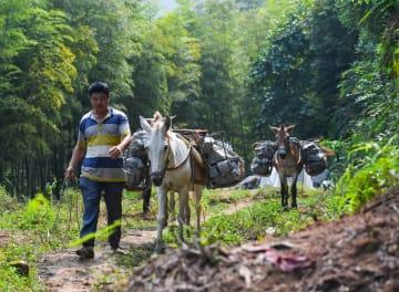 インフラ建設を支える荷馬隊 江西省興国県