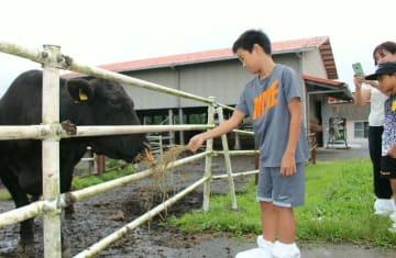 牛に餌をやる参加した小学生=竹田市久住町の久住高原農業高