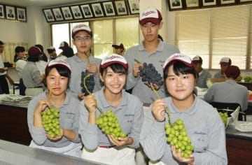 栽培したブドウを台湾で販売する丹原高生