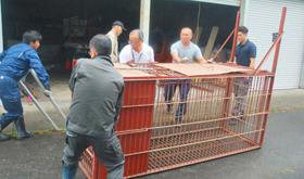 社台地区へ設置するため、物置からヒグマ捕獲用の「箱わな」を運び出す職員