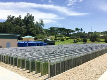 An algae cultivation facility operated by Mitsubishi Corp. and Sarawak Biodiversity Centre in Kuching, Sarawak in Borneo, Malaysia. (Photo courtesy of Chitose)
