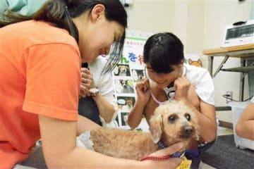 熊本市動物愛護センターに保護された犬の心音を聴診器で聞く参加者=熊本市東区
