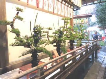 地元住民から奉納された「立花」(亀岡市大井町・大井神社)