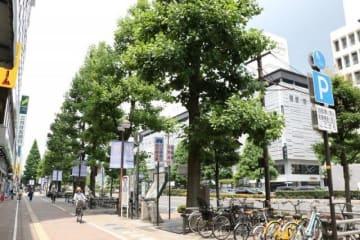 再生される桃太郎大通りの街路樹