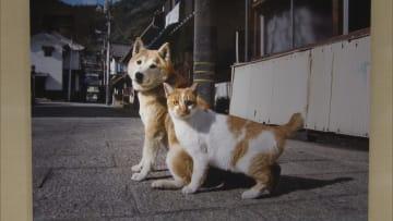 ぴったりと寄り添うネコとイヌ