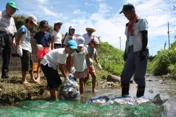 川にカキ殻を設置する児童ら=諫早市、中里川