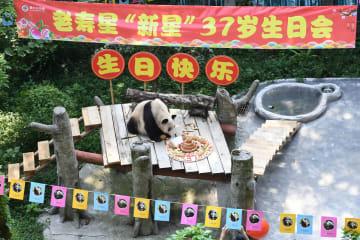 世界最年長のパンダ、37歳の誕生日を迎える 重慶市