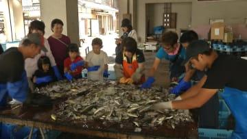 定置網で捕まえた魚の選別に挑戦する子どもたち