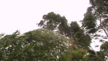 台風11号の被害受けた電力網、復旧急ピッチ 福建省泉州市