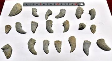採取されたサンゴ類の化石