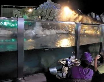 「オータムナイトZOO特別企画のペンギンバー(東武動物公園提供)