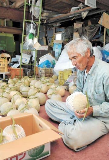 メロンを箱詰めする檜森さん。出荷作業は終盤を迎えている=秋田県三種町